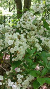 White mountain flowers