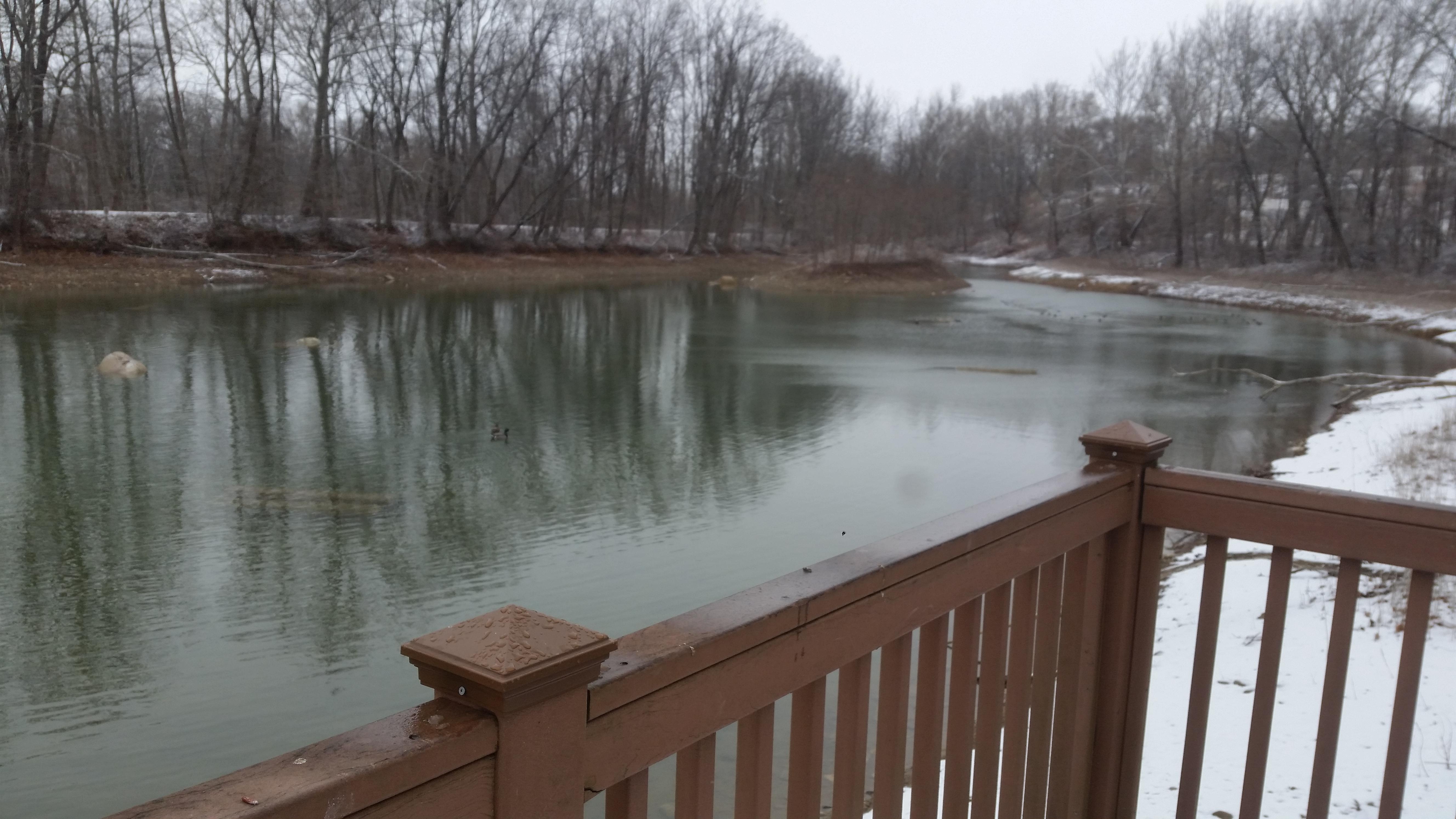 unfrozen pond in winter
