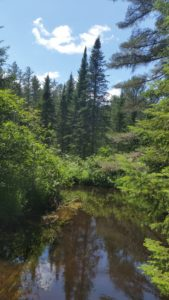 creek, pine trees, sky