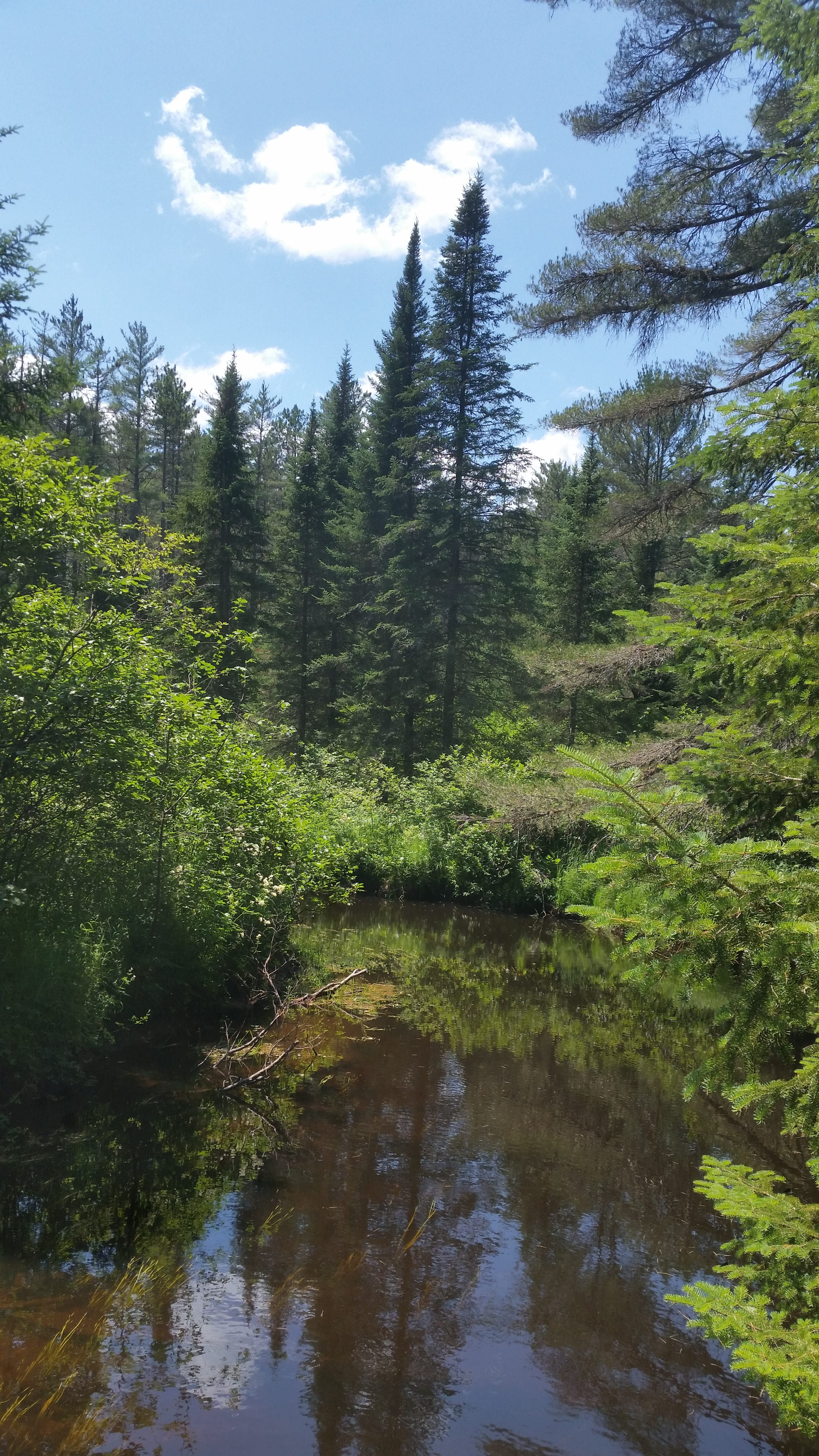 creek, pine trees, sky