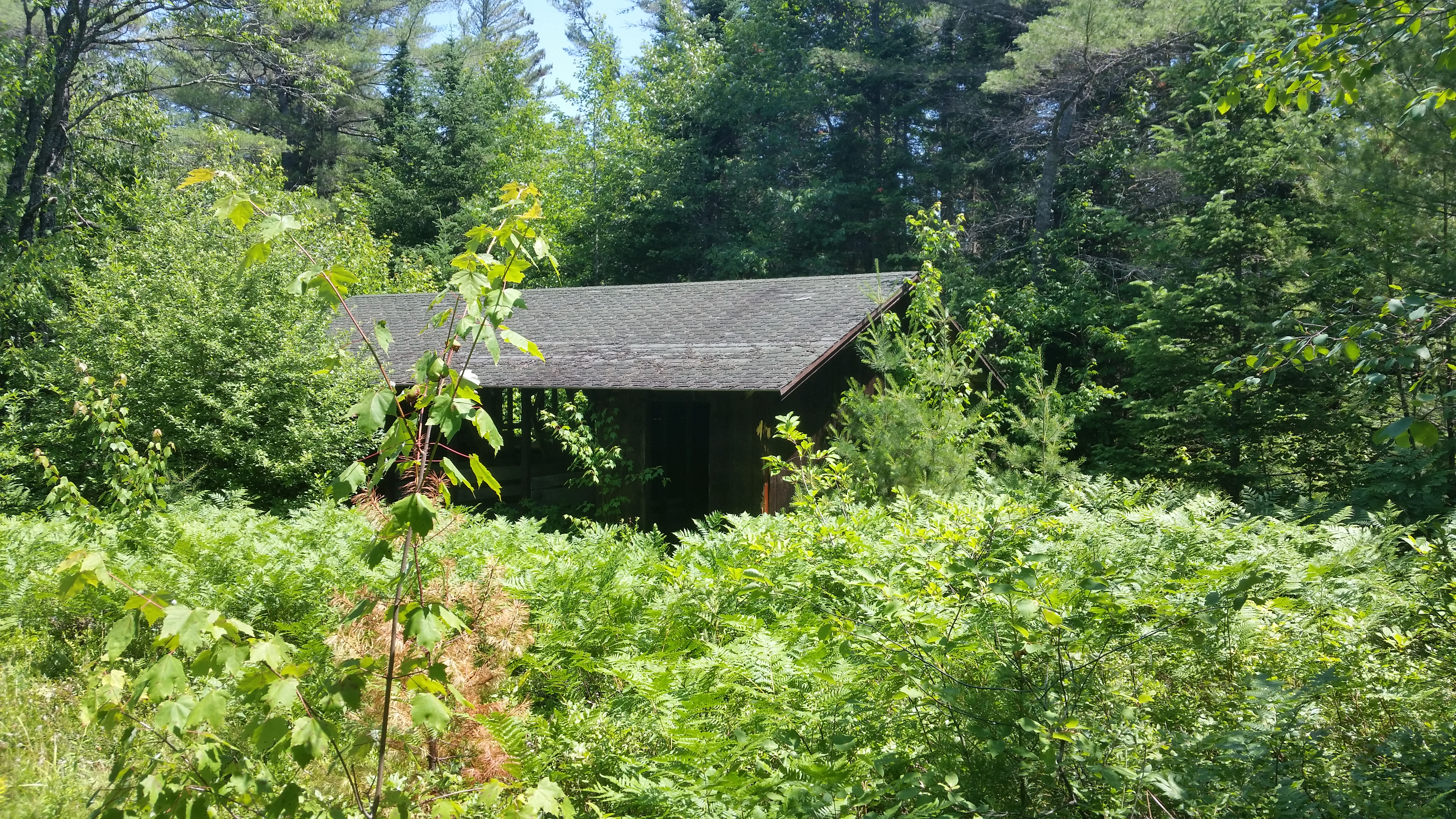 wooden building in forest clearing