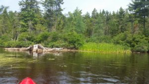 lake shore vegetation