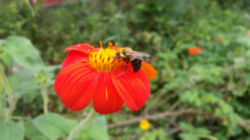 bee on flower
