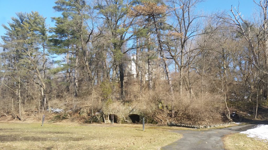 house behind trees on hill