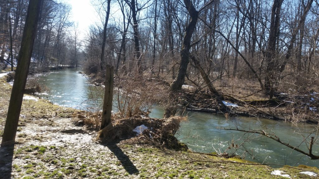stream through forest