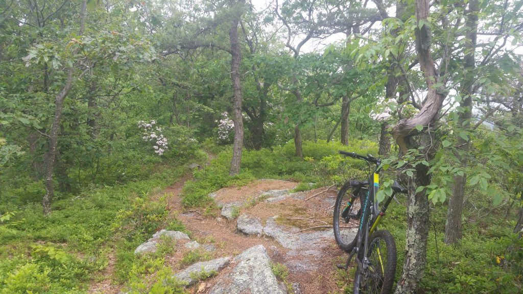 bicycle in flowery forest